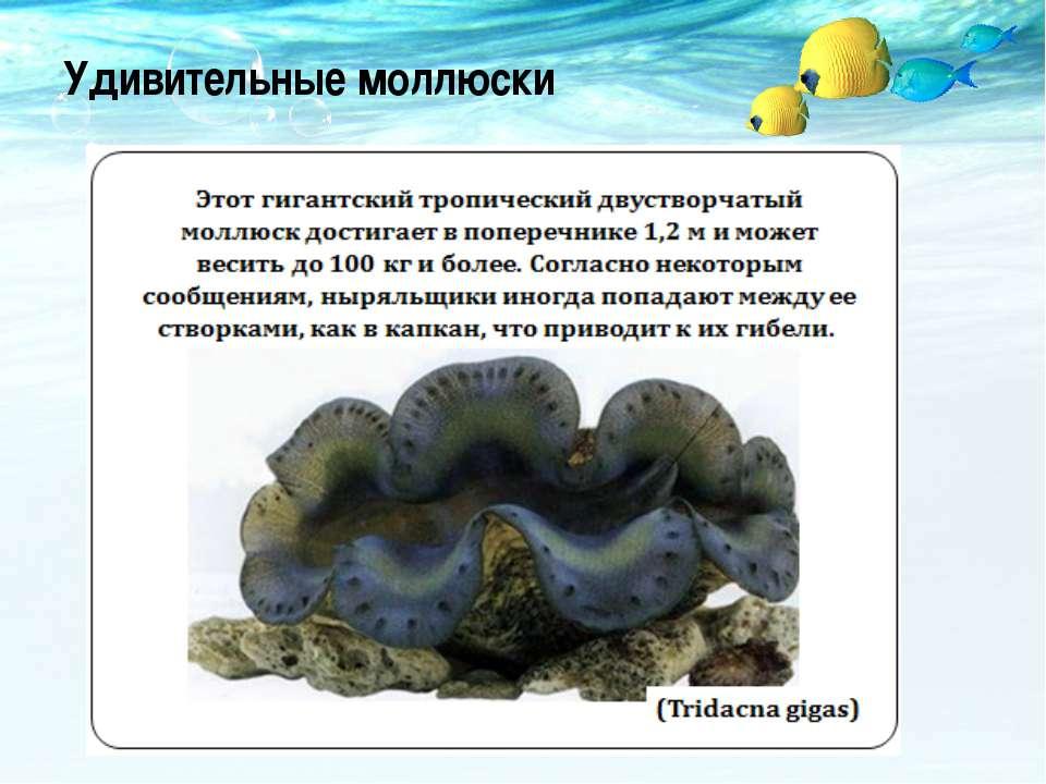 Удивительные моллюски