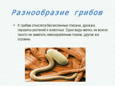 Разнообразие грибов К грибам относятся бесчисленные плесени, дрожжи, паразиты...
