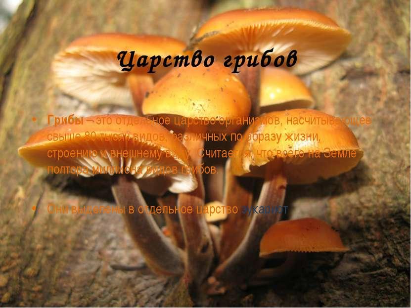 Царство грибов Грибы – это отдельное царство организмов, насчитывающее свыше ...