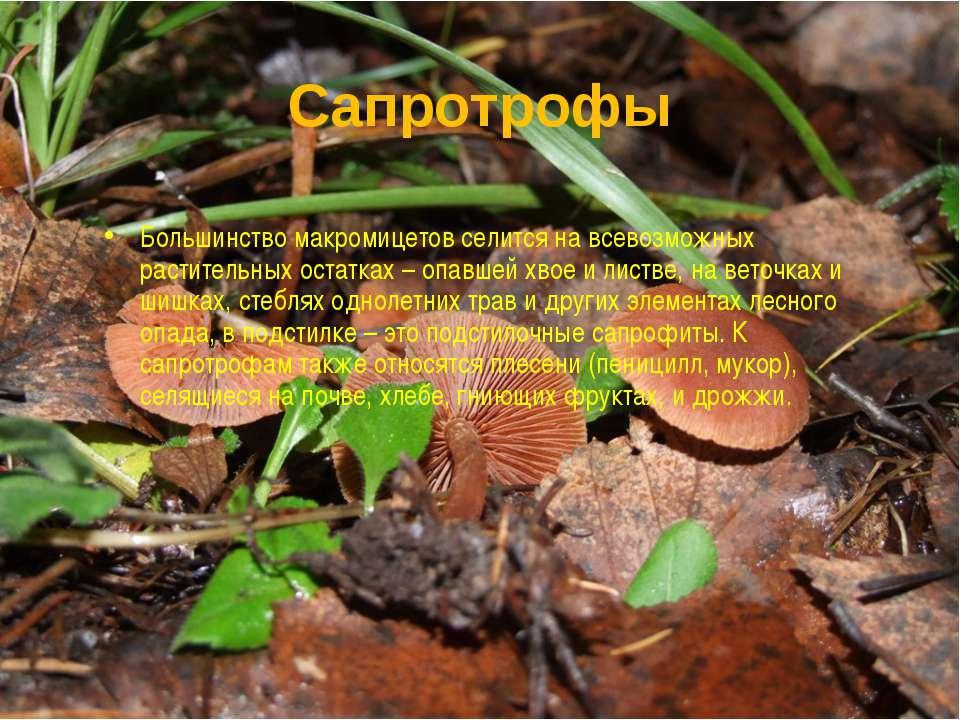 Сапротрофы Большинство макромицетов селится на всевозможных растительных оста...