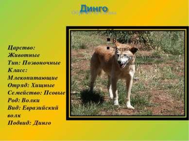 Царство: Животные Тип: Позвоночные Класс: Млекопитающие Отряд: Хищные Семейст...