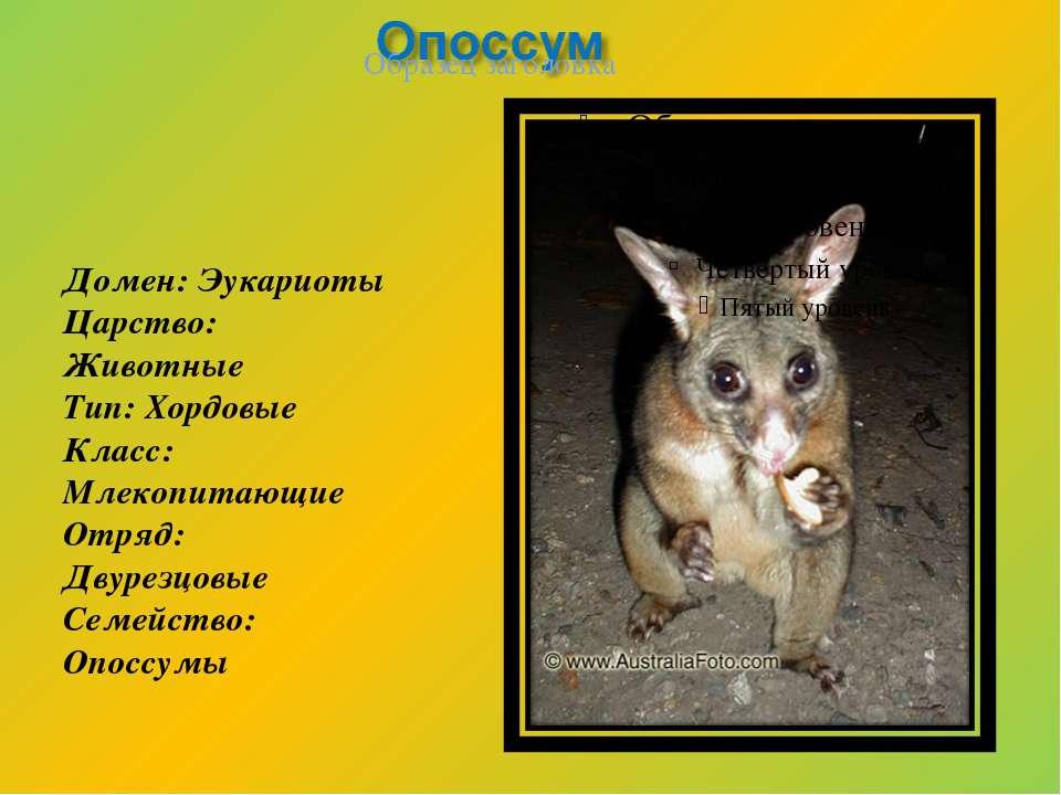 Домен: Эукариоты Царство: Животные Тип: Хордовые Класс: Млекопитающие Отряд: ...