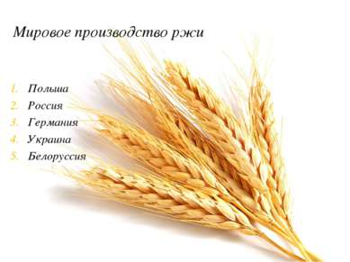Мировое производство ржи Польша Россия Германия Украина Белоруссия