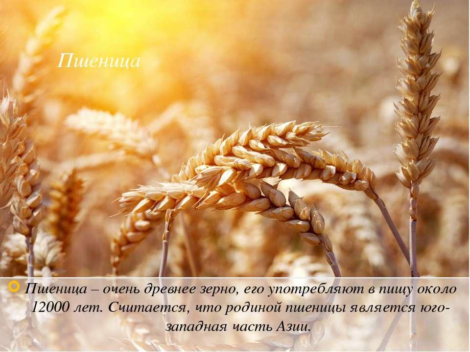 Пшеница Пшеница – очень древнее зерно, его употребляют в пищу около 12000 лет...