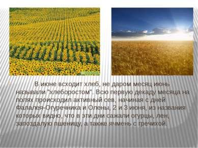 """В июне всходит хлеб, не даром месяц июнь называли """"хлеборостом"""". Вс..."""