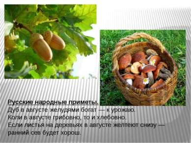 Русские народные приметы. Дуб в августе желудями богат— к урожаю. Коли в авг...