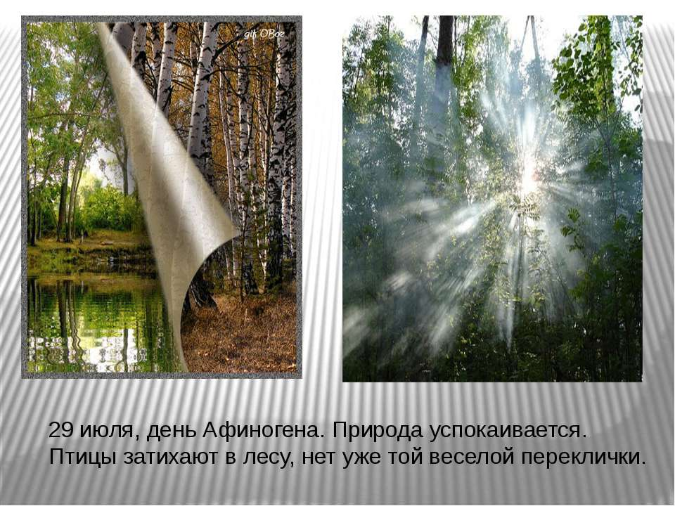 29 июля, день Афиногена. Природа успокаивается. Птицы затихают в лесу, нет уж...