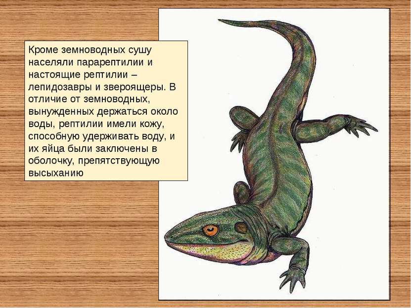 Кроме земноводных сушу населяли парарептилии и настоящие рептилии – лепидозав...