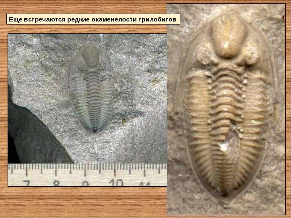 Еще встречаются редкие окаменелости трилобитов