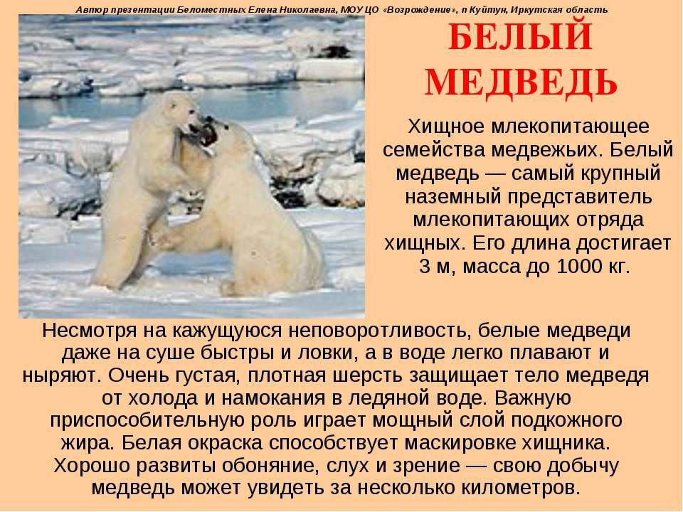 БЕЛЫЙ МЕДВЕДЬ Хищное млекопитающее семейства медвежьих. Белый медведь— самый...