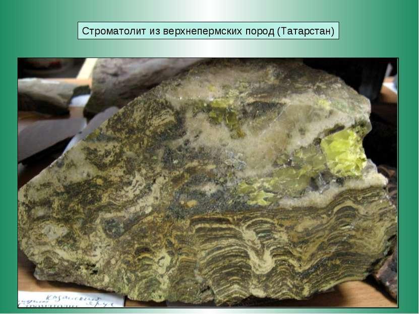 Строматолит из верхнепермских пород (Татарстан)