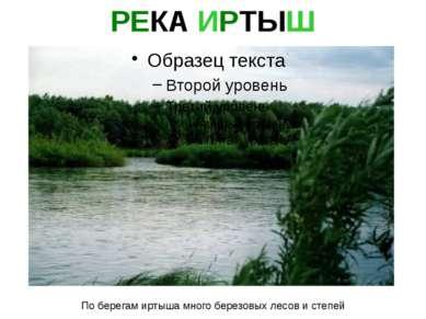 По берегам иртыша много березовых лесов и степей РЕКА ИРТЫШ