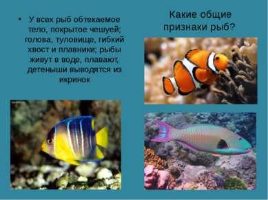 Какие общие признаки рыб? У всех рыб обтекаемое тело, покрытое чешуей; голова...