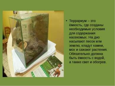 Террариум – это ёмкость, где созданы необходимые условия для содержания насек...