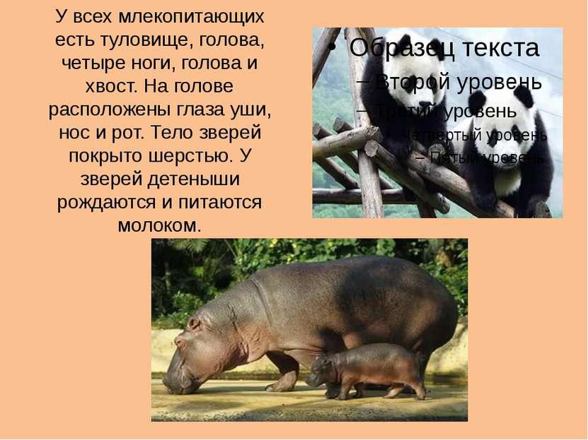 У всех млекопитающих есть туловище, голова, четыре ноги, голова и хвост. На г...