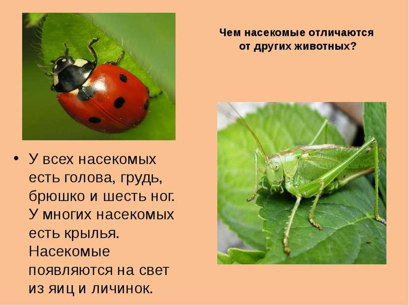 Чем насекомые отличаются от других животных? У всех насекомых есть голова, гр...