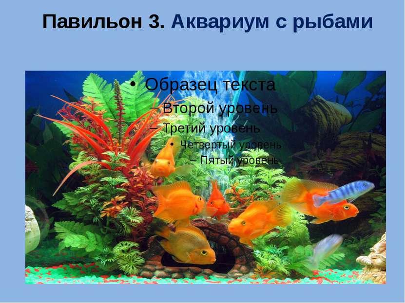 Павильон 3. Аквариум с рыбами