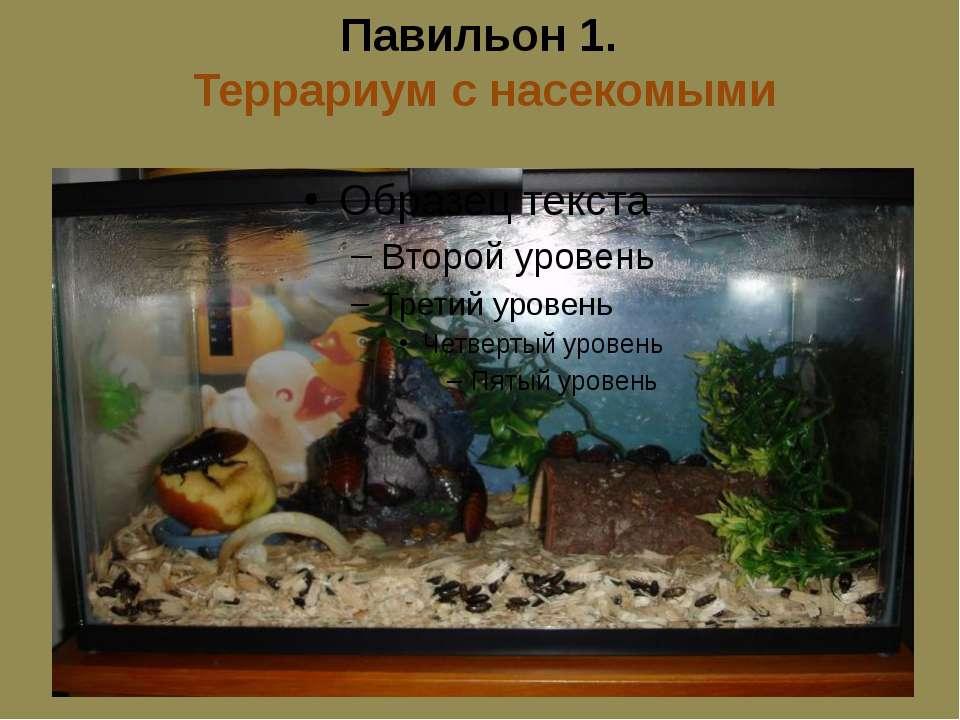 Павильон 1. Террариум с насекомыми