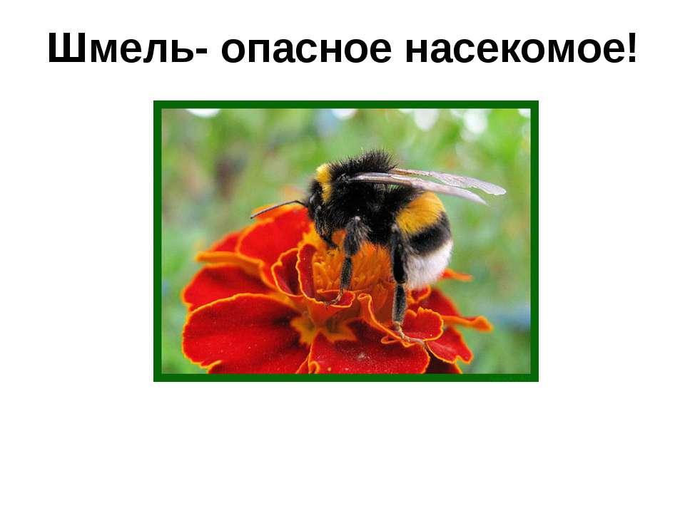 Шмель- опасное насекомое!