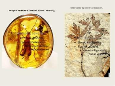 Янтарь с насекомым, жившим 50 млн. лет назад. Отпечаток древнего растения.