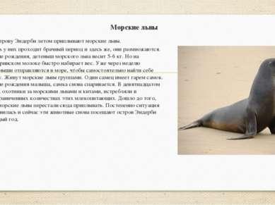 Морские львы К острову Эндерби летом приплывают морские львы. Здесь у них про...