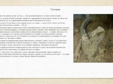 Гаттерия Гатте рия, или сфенодон, или туата ра — вид пресмыкающихся из отряда...