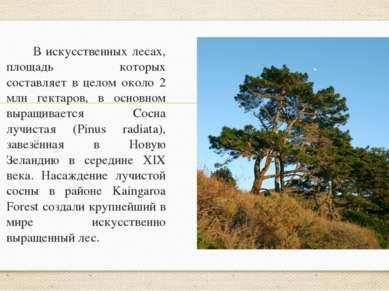 В искусственных лесах, площадь которых составляет в целом около 2 млн гектаро...