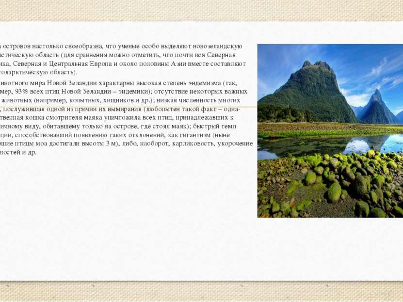 Фауна островов настолько своеобразна, что ученые особо выделяют новозеландску...