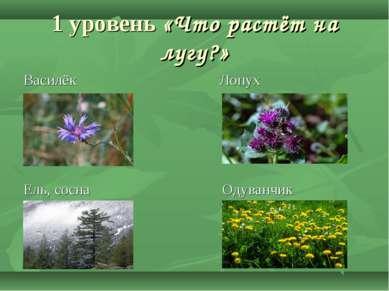 1 уровень «Что растёт на лугу?» Василёк Лопух Ель, сосна Одуванчик
