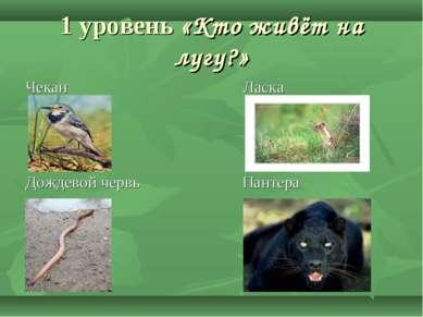 1 уровень «Кто живёт на лугу?» Чекан Ласка Дождевой червь Пантера