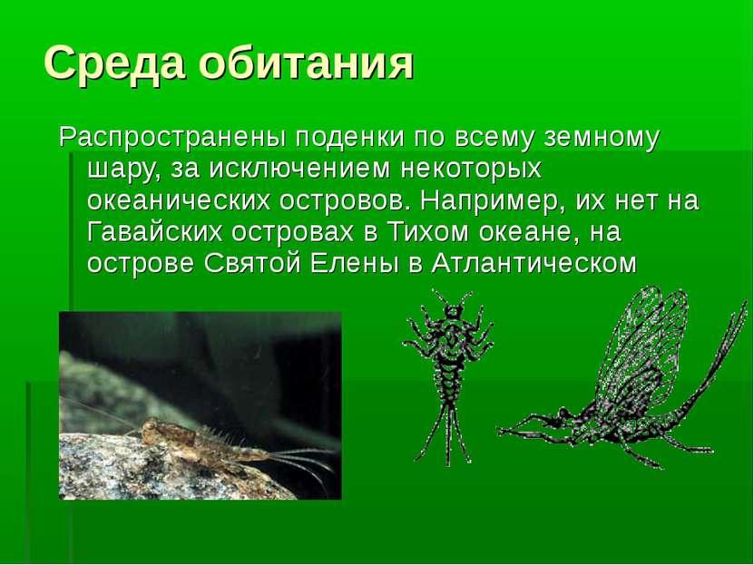 Среда обитания Распространены поденки по всему земному шару, за исключением н...