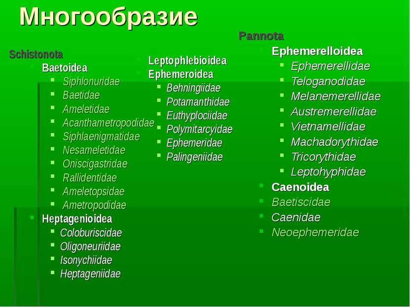 Многообразие Schistonota Baetoidea Siphlonuridae Baetidae Ameletidae Acantham...