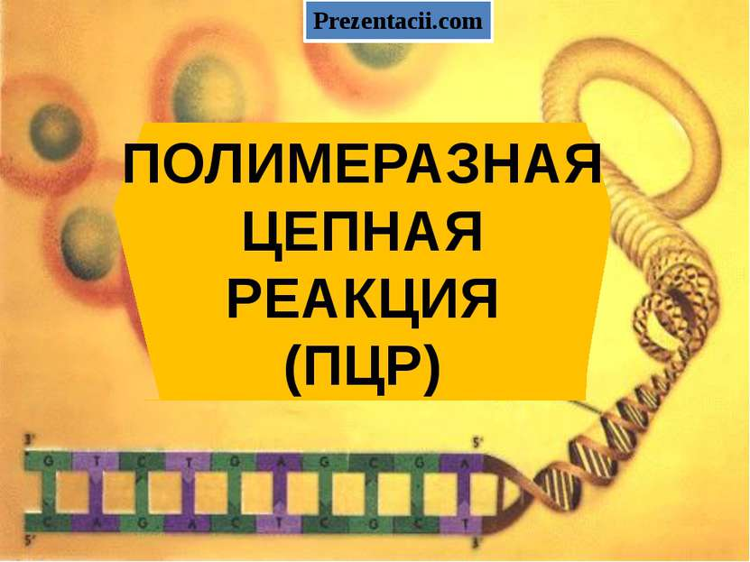 ПОЛИМЕРАЗНАЯ ЦЕПНАЯ РЕАКЦИЯ (ПЦР) Prezentacii.com