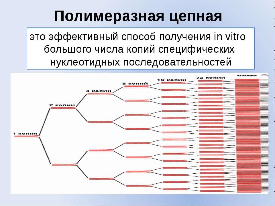 Полимеразная цепная реакция это эффективный способ получения in vitro большог...