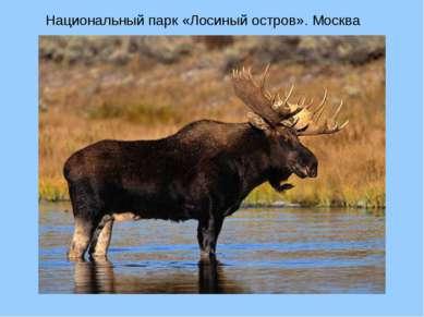 Национальный парк «Лосиный остров». Москва