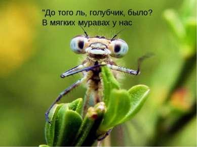 """""""До того ль, голубчик, было? В мягких муравах у нас"""
