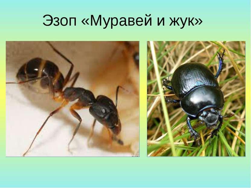 Эзоп «Муравей и жук»