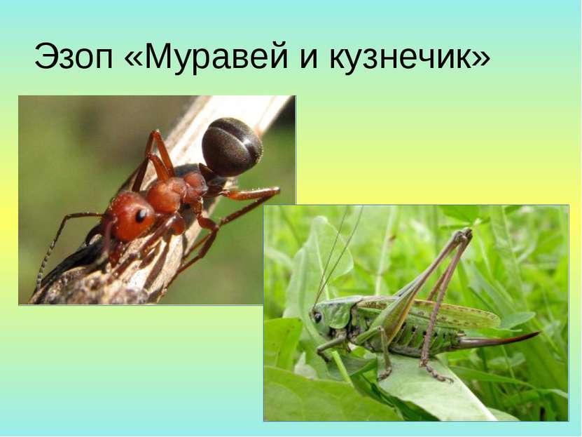 Эзоп «Муравей и кузнечик»