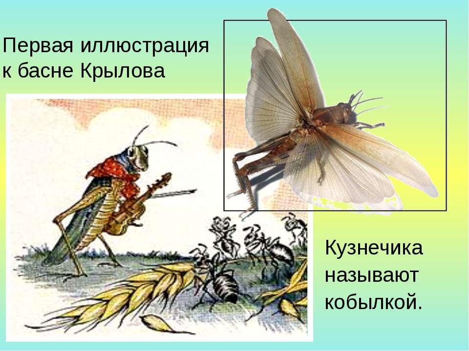 Первая иллюстрация к басне Крылова Кузнечика называют кобылкой.