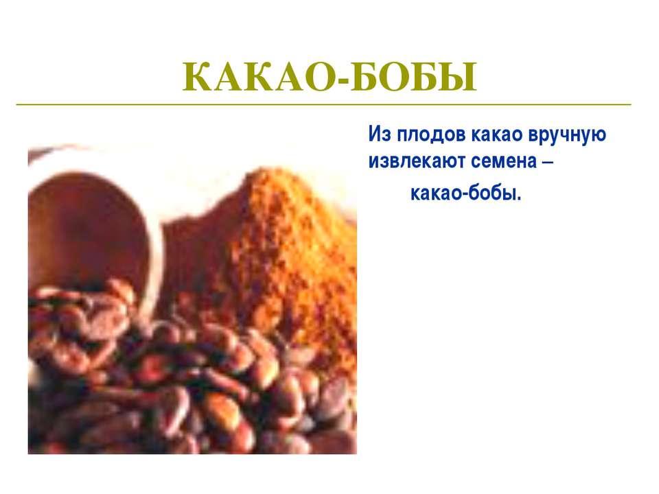 КАКАО-БОБЫ Из плодов какао вручную извлекают семена – какао-бобы.