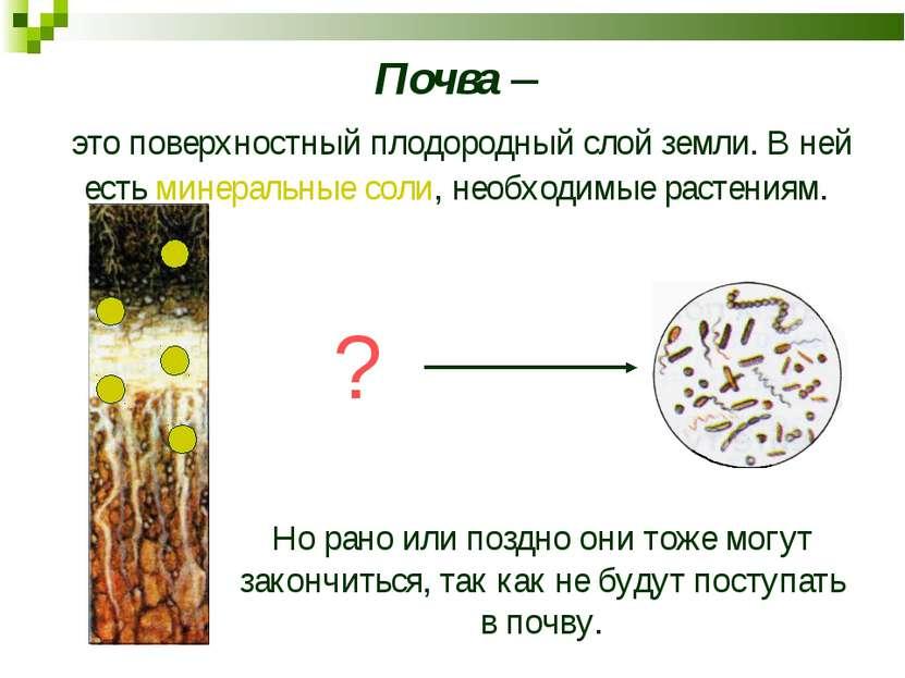 Почва – это поверхностный плодородный слой земли. В ней есть минеральные соли...