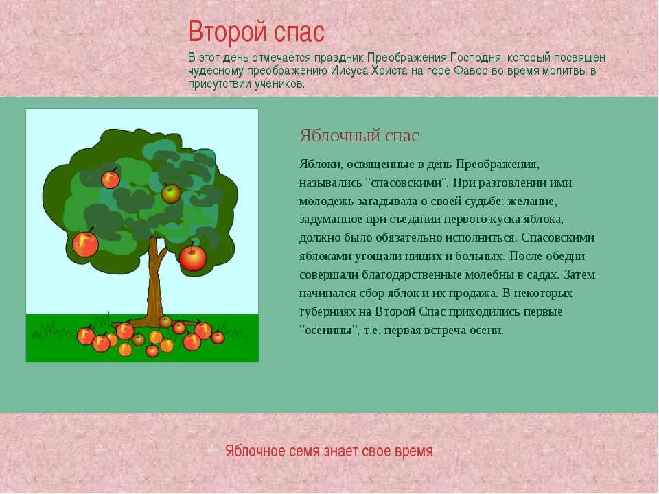 Яблочный спас Яблочное семя знает свое время Яблоки, освященные в день Преобр...