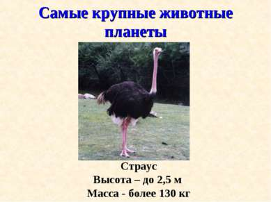 Самые крупные животные планеты Страус Высота – до 2,5 м Масса - более 130 кг