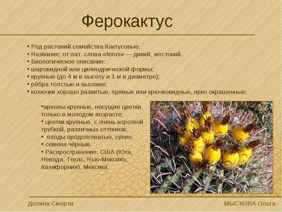 Ферокактус Род растений семейства Кактусовые. Название: от лат. слова «ferus»...