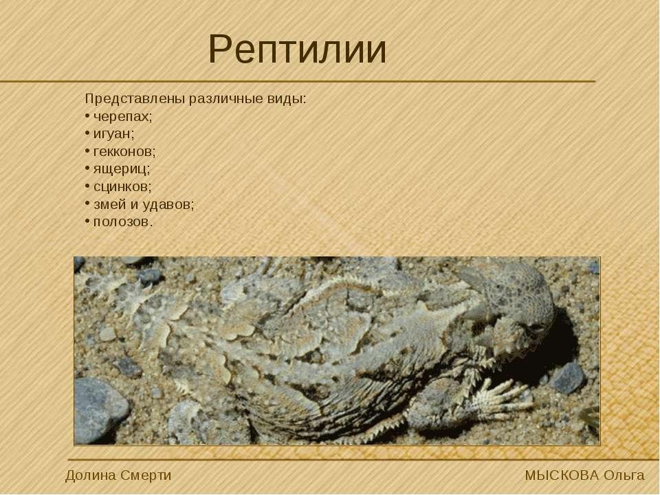 Рептилии Долина Смерти МЫСКОВА Ольга Представлены различные виды: черепах; иг...
