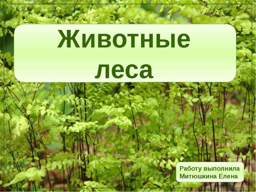 Животные леса Работу выполнила Митюшкина Елена