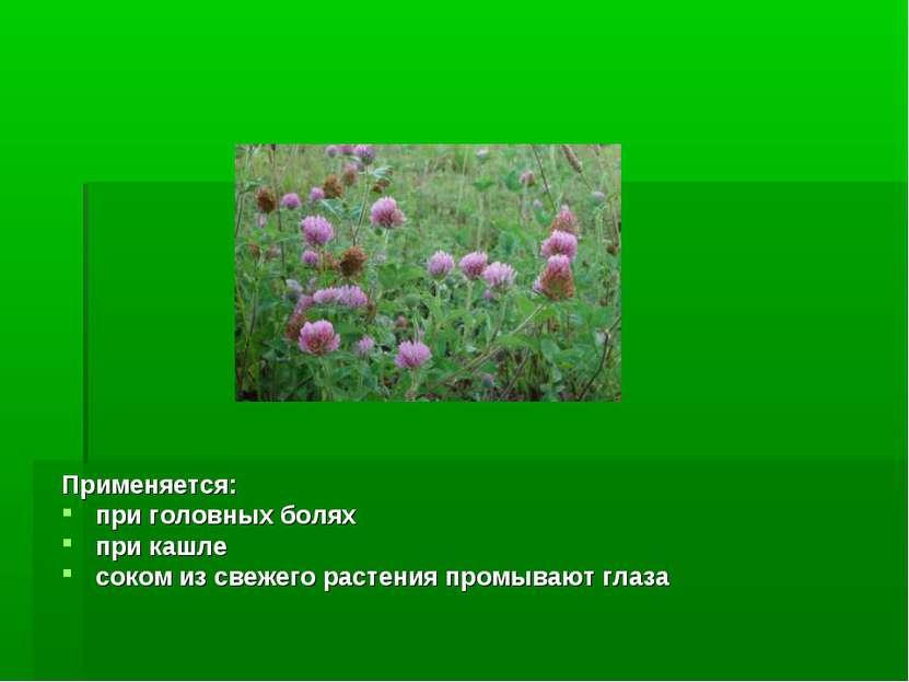 Применяется: при головных болях при кашле соком из свежего растения промывают...