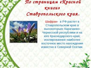 По страницам «Красной книги» Ставропольского края. Шафран- в РФ растет в Став...