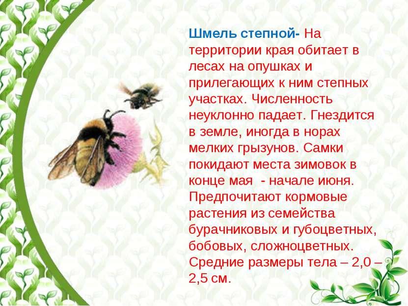 Шмель степной- На территории края обитает в лесах на опушках и прилегающих к ...