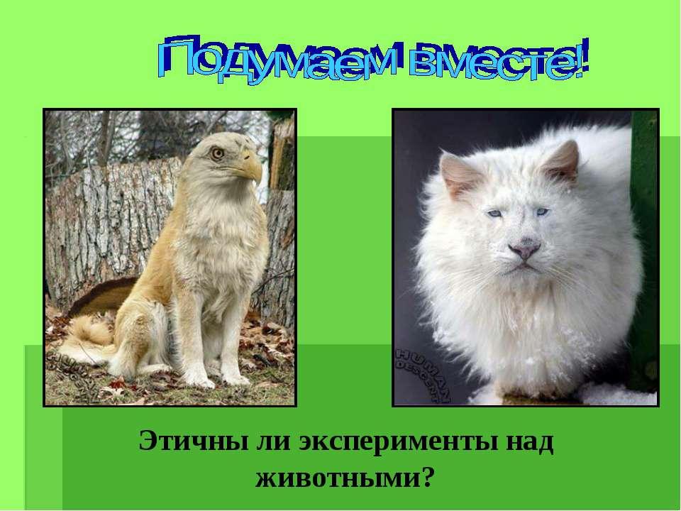 Этичны ли эксперименты над животными?
